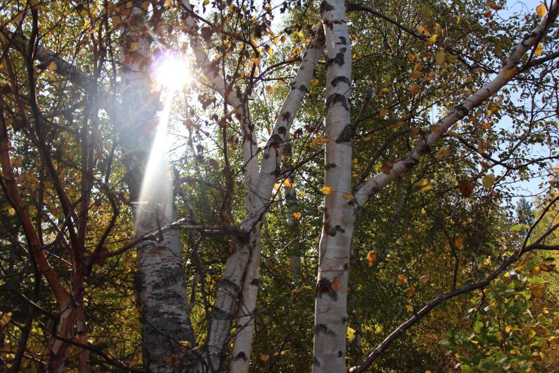 Light thru trees
